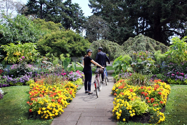 Couple walking with bikes at Beacon Hill park, large yellow marigolds along path towards large coniferous tree